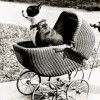 dog in a child's pram