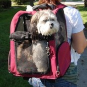 Leopard Print Pet Roller Carrier and Backpack for Dogs and Cats 3