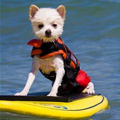 are all dogs good swimmers life jackets for dogs www.dog-strollers.co.uk