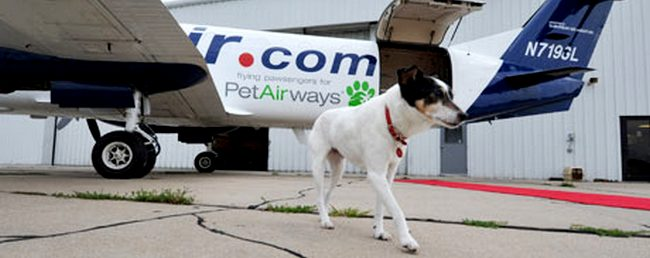 some handy tips and advice on travelling by air with your dog
