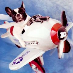 Pet friendly airlines within the UK