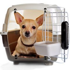 you will need an airline approved pet carrier if flying with your dog