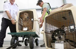 your dog will be safe with the airline animal cargo handlers
