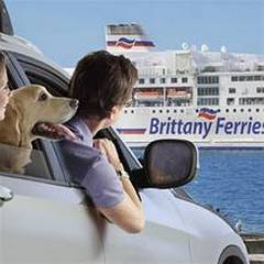 helpful advice on travelling with your dog by Ferry