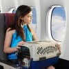 Travelling by air with your dog