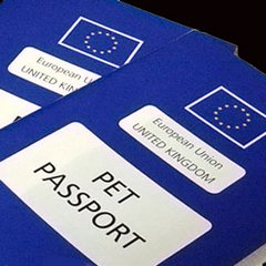 Five steps on how to get an EU Pet Passport for your Dog
