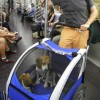 Dog strollers are perfect for busy cities and the subway