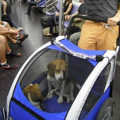 Dogs in a secure pet stroller on the New York Subway