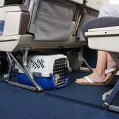 small pet carrier maybe allowed in the airplane cabin