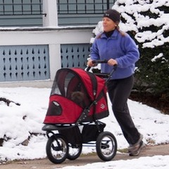 Tips on buying a pet or dog jogging stroller