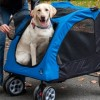 dog stroller training