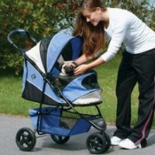 dogs who use dog strollers still need to exercise