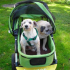 Can a dog that uses a pet stroller become lazy and obese?