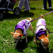 puppies taking some exercise out of their dog stroller at the dog park