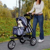 a puppy enjoying an outing in a puppy dog stroller