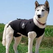 How does the Thundershirt or Anxiety Wrap work?