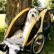 Burley Design Tail Wagon Bicycle Dog Trailer medium sized dog enjoying the view with the rear panel open
