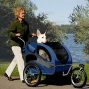 you can burn more calories pushing a dog stroller