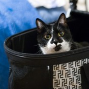 a cat in an 'all in one' or '3 in 1' pet stroller