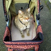 a pet stroller offers your cat safety, comfort and privacy