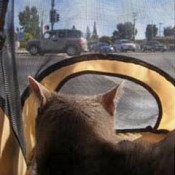 a pet stroller can provide a good view yet a great deal of privacy for your cat