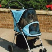 a pet stroller will protect your cat from wet and sunny weather