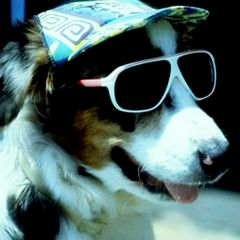 prevent your dog from getting sunburn