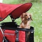 a puppy stroller can protect your puppy from the harmful UV rays in hot sunny weather