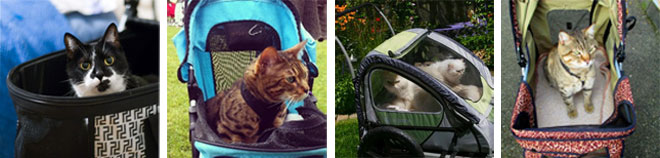 Dog Strollers are perfect for cats too!
