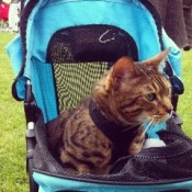 pet strollers for your cat come in various clolours and styles