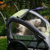 pet strollers come in all sizes for one or more cats