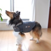 How a Thundershirt or Anxiety Wrap can help your dog