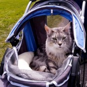 So which pet stroller is right for my cat?