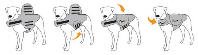 how to fit a thundershirt on your dog