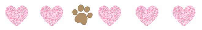 Valentines Day Gifts for your Dog