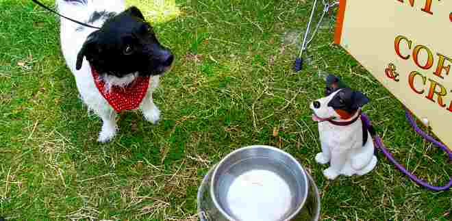 How to keep your dog cool in the hot summer weather