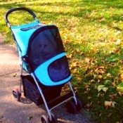 a pet stroller can protect your dog in the autumn