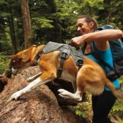 adventure dog lifting harnesses can be used on fit and healthy dogs