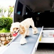 a dog ramp are pefect for small dogs to climb out of the car