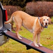 Dog Mobility Ramps for the home, garden and car