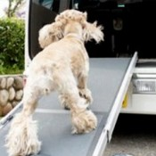a dog ramp are pefect for small dogs to climb into the car