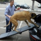dog ramps are perfect for large heavy dogs