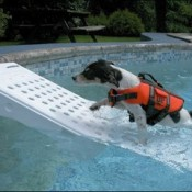 a dog ramp designed specifically for the water, pool, river or sea