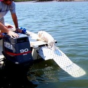 a dog ramp designed for use on a boat on the open water