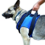 a front dog lifting harness can help take some of the weight off your dog's front legs