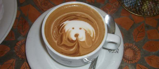 dog friendly cafes in england_660