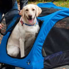 Ways to help make your dog love their stroller